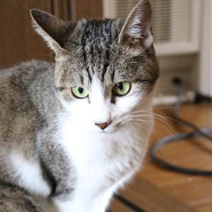 猫を拾ってきたよ!猫落ちてたら拾ってきていいって言ったよね?