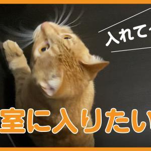 新しい動画をUPしました!【寝室に入りたい猫】