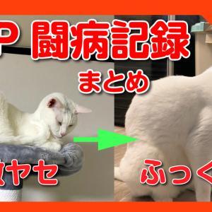 激ヤセし、毛ツヤもガサガサだった猫はFIPドライタイプという恐ろしい病気でした。FIPと闘う猫と飼い主の闘病記録まとめ。