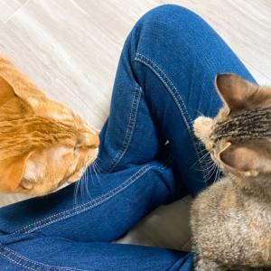 保護16日目 子猫のエル 成長記録 カーテンでかくれんぼ パート2