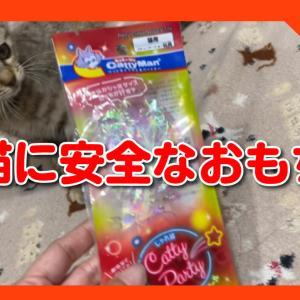 新しいおもちゃを買ってみました!カシャカシャ鳴ってとっても楽しい、仔猫が喜ぶ安全なおもちゃ。A safe toy that kittens will love.