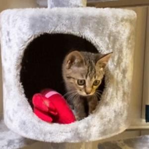 保護20日目 子猫のエル 成長記録 お気に入りの場所発見!