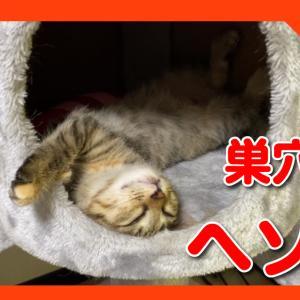 猫の巣穴でヘソ天で眠る子猫の姿がかわいすぎた!The appearance of the kitten sleeping in the navel heaven is cute!