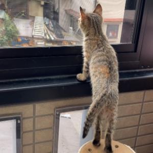 保護24日目 子猫のエル 成長記録 ニャルソックを覚えた!