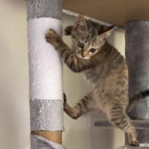 保護26日目 子猫のエル 成長記録 飛び回る