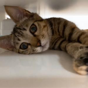 保護猫 子猫のエル 成長記録 生後3ヶ月 エルのかくれんぼ