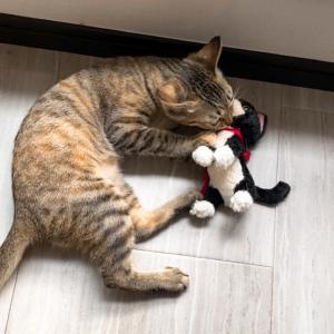 保護猫 子猫のエル 成長記録 生後3ヶ月 猫ちゃんで遊ぶ