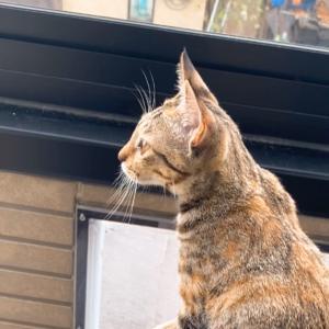 【神々しいニャルソック】保護猫 子猫のエル 成長記録 生後5ヶ月