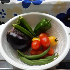 野菜収穫(^_^)v