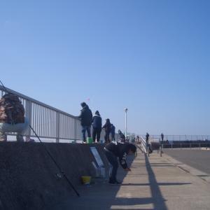 豊浜漁港でイワシ釣り