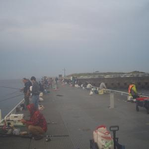 豊浜漁港に釣りに行きました。