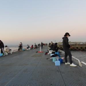 豊浜漁港へ釣りに行きました