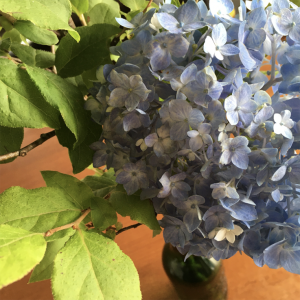 「花より団子」が「花と団子」になってきた