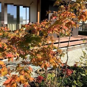 11月の庭②
