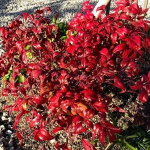 12月の庭①