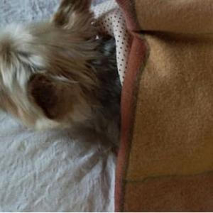 冬並みの寒い日、家でゴロゴロ寝て過ごしました!