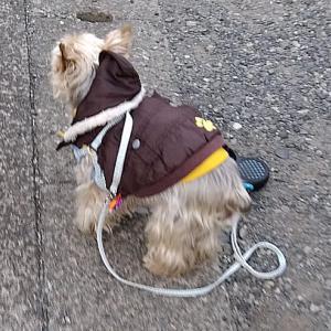 寒い中でも散歩するのは大好き!