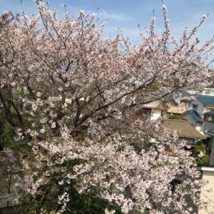 桜の後始末