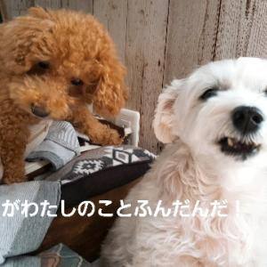 ロミたんと杏ちゃん