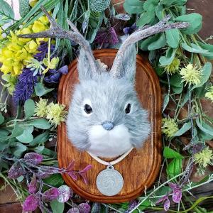 ウサギちゃん→ジャッカロープ