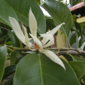 バリ島の神様が大好きなチュンパカのお花!そしてありがとう&唐草模様シルバー925ペンダントトップ
