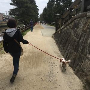 チャコ散歩【松並木&綾瀬川左岸広場】