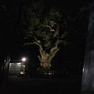 夜の熱田神宮⭐️名古屋ありがとうっ!