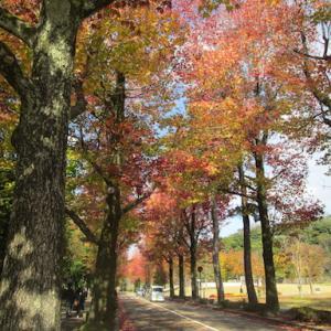 秋の散歩道と、今日のオヤツと夕ごはん