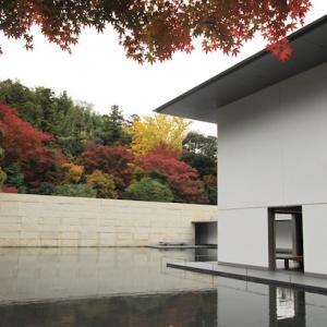 秋の終わりの風景と、今日の夕ごはん