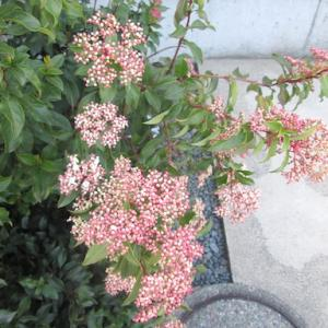 やっと咲いた花と、今日のオヤツと夕ごはん