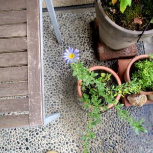 花と色と 空の色と、いつもの食卓