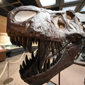 栃木県立博物館と恐竜ティラノサウルス