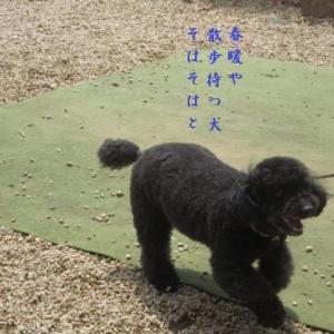 ご近所の犬