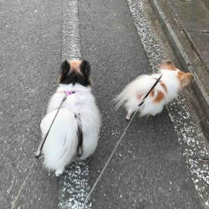 土手散歩 (#^.^#)
