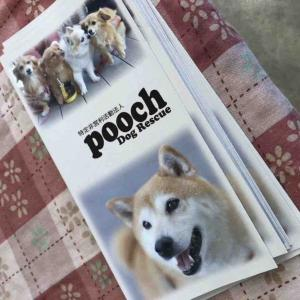 poochdogrescue 譲渡会 (#^.^#)