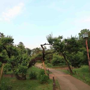 大倉山公園梅林 (#^.^#)