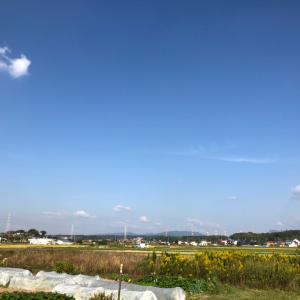 大収穫祭と種まきの農園の一日