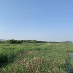 【上海deアウトドア】蘇州の草原でデイキャンプ♪
