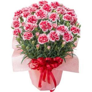母の日 早割 カーネーション 鉢植え ギフト プレゼント 選べる10種の花 赤 ピンク オレン…