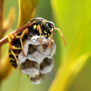【ハチの巣駆除】自宅の軒下で見つけた蜂の巣を自分で駆除してみた感想