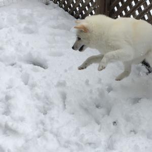 すみません。天気予報通り雪☃️