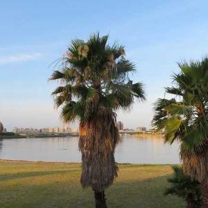 御前浜の植物1 ヤシの木