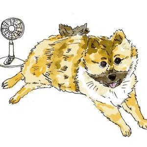 暑くても元気なペット