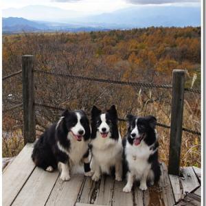 秋の長野山梨旅行とパルの家族会+誕生日会 ⑥美しの森散策