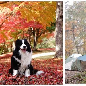 黄葉紅葉まみれのキャンプ  帝釈峡くぬぎの森 ④ 朝靄のキャンプ場独占