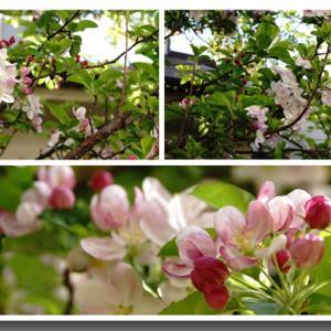 花のまとめ ①3月~5月