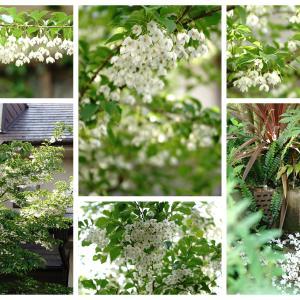 花のまとめ ②4月~5月