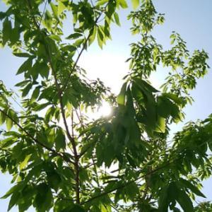 窓辺の表面温度から植生による日射遮蔽の効果をチェックしてみた