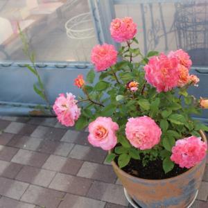 百合と薔薇