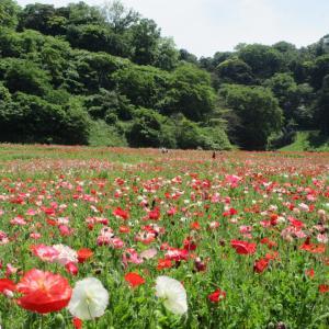 武山/三浦富士/くりはま花の国